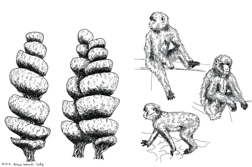 20_cadiz_gibraltar_trees_monkeys_web.jpg