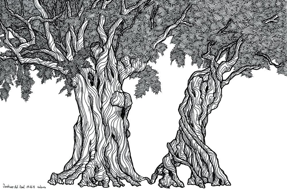 36_valencia_olive-trees_web.jpg
