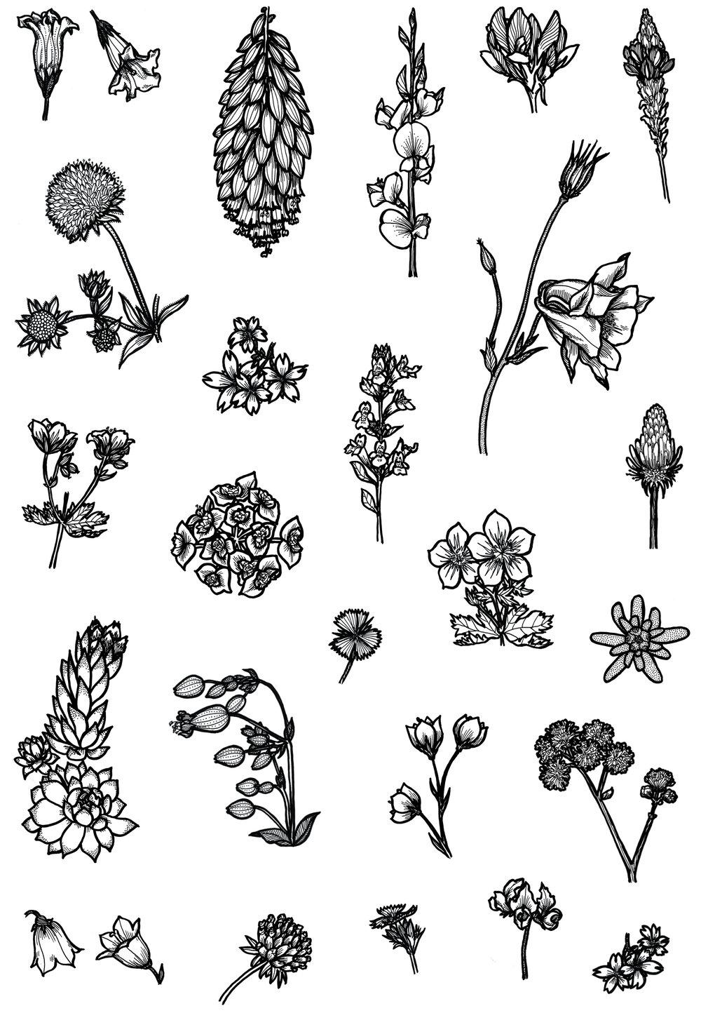 stillonoir_alpine-flora.jpg