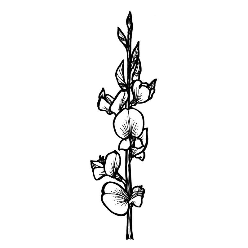 alpine-flora_individual-flowers4.jpg