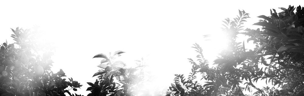 Sol_004_Aura008-1.jpg
