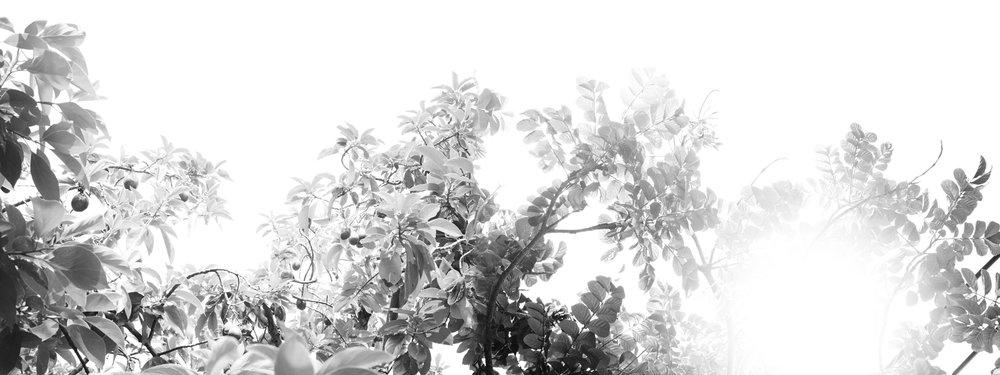 Sol_003_Aura007.jpg