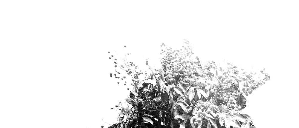 Sol_011_Aura006.jpg