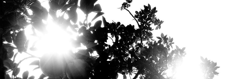 Sol_013_Aura013-R.jpg