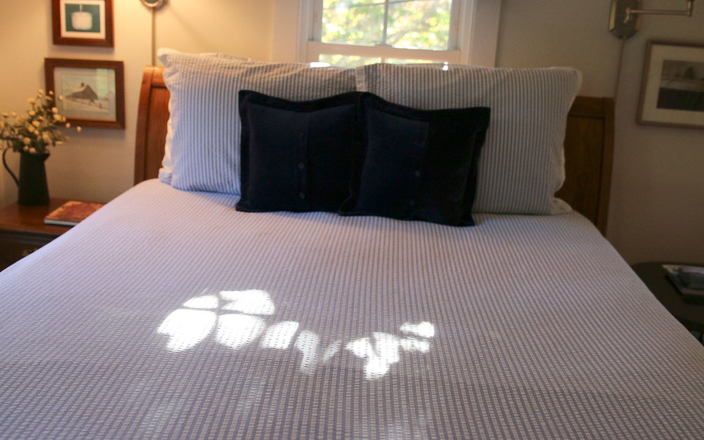 Flying-Eagle_sunlight-on-bed_IMG_7595.jpg