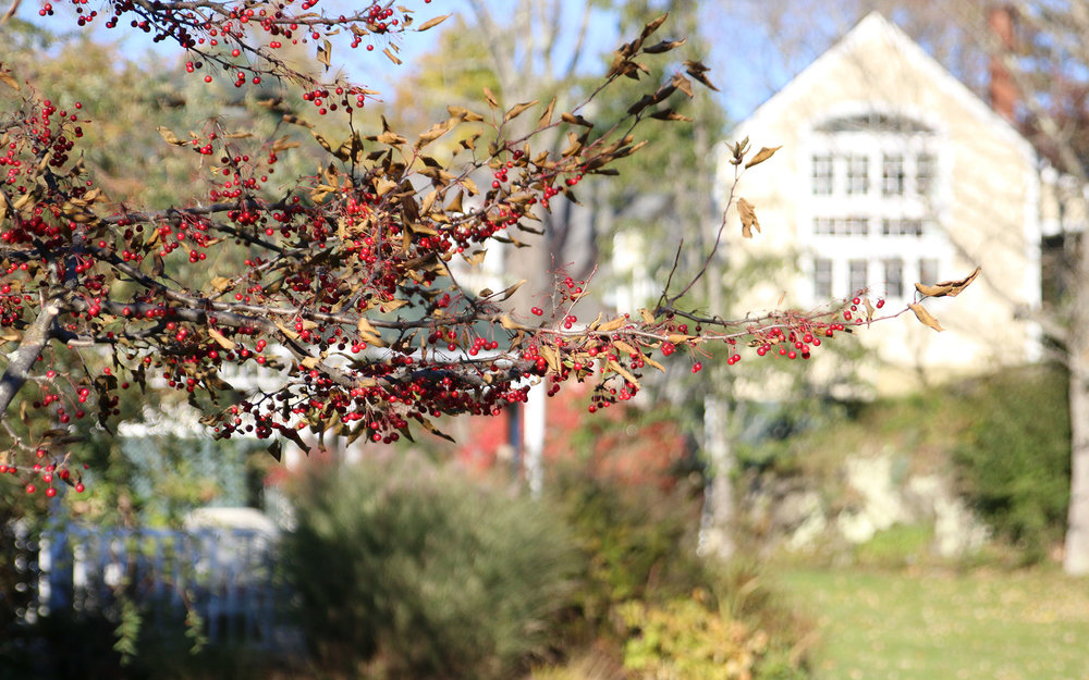berries_IMG_7631.jpg