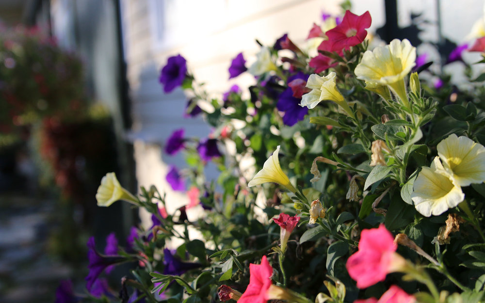 Flowers-2-IMG_7663.jpg