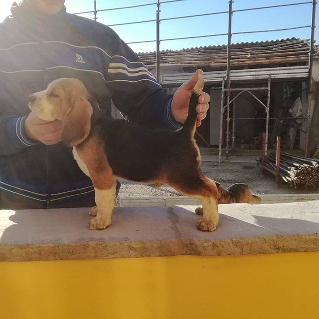 Http://www.beaglelamarca.it