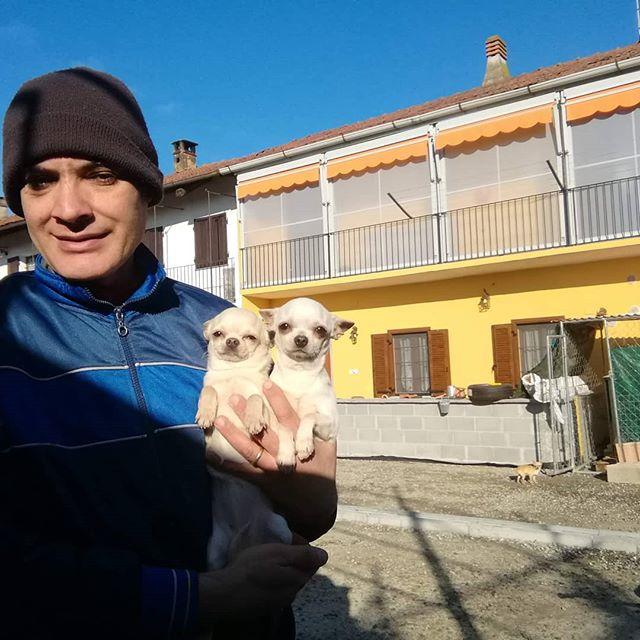 Buona domenica Hup://www.beaglelamarca.it HttP://www.cuccioli-chihuahua.com