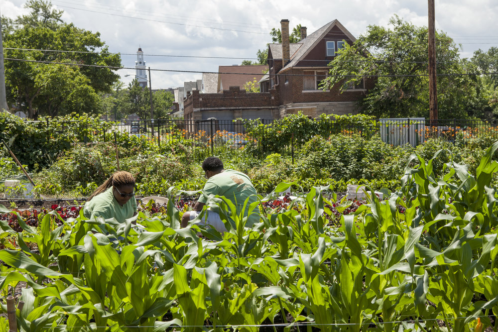 Efforts to green abandoned lots and create new parklands have help the Greater University Circle neighborhoods stem the tide of urban decay and outmigration in Cleveland.
