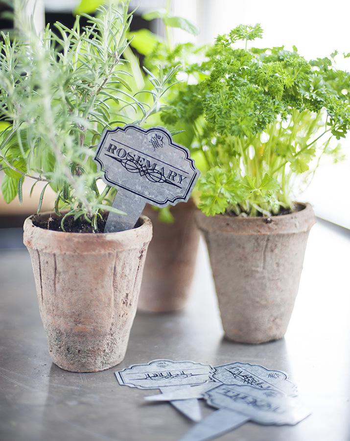 rosemary-herb.jpg