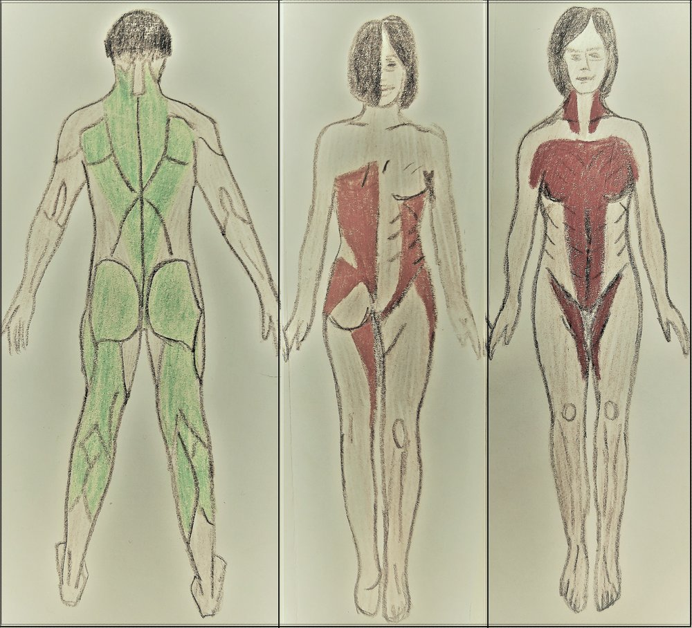 THE THREE STRESS REFLEXES: - AREAS OF MUSCLE TENSION ASSOCIATED WITH EACH REFLEX