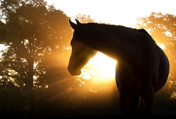 morning-horse-sunrise.jpg