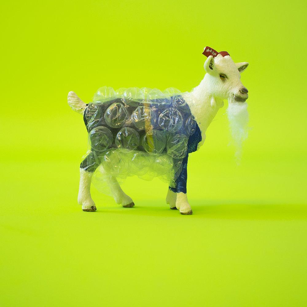 Bubblewrap_Goat.jpg