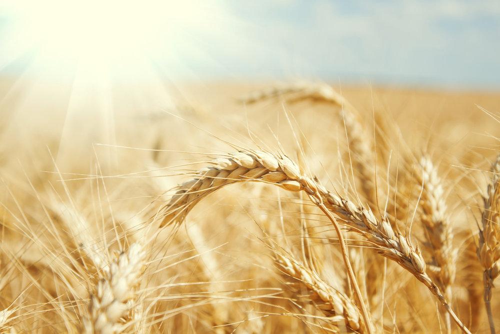 Crop Assessment 2.jpg