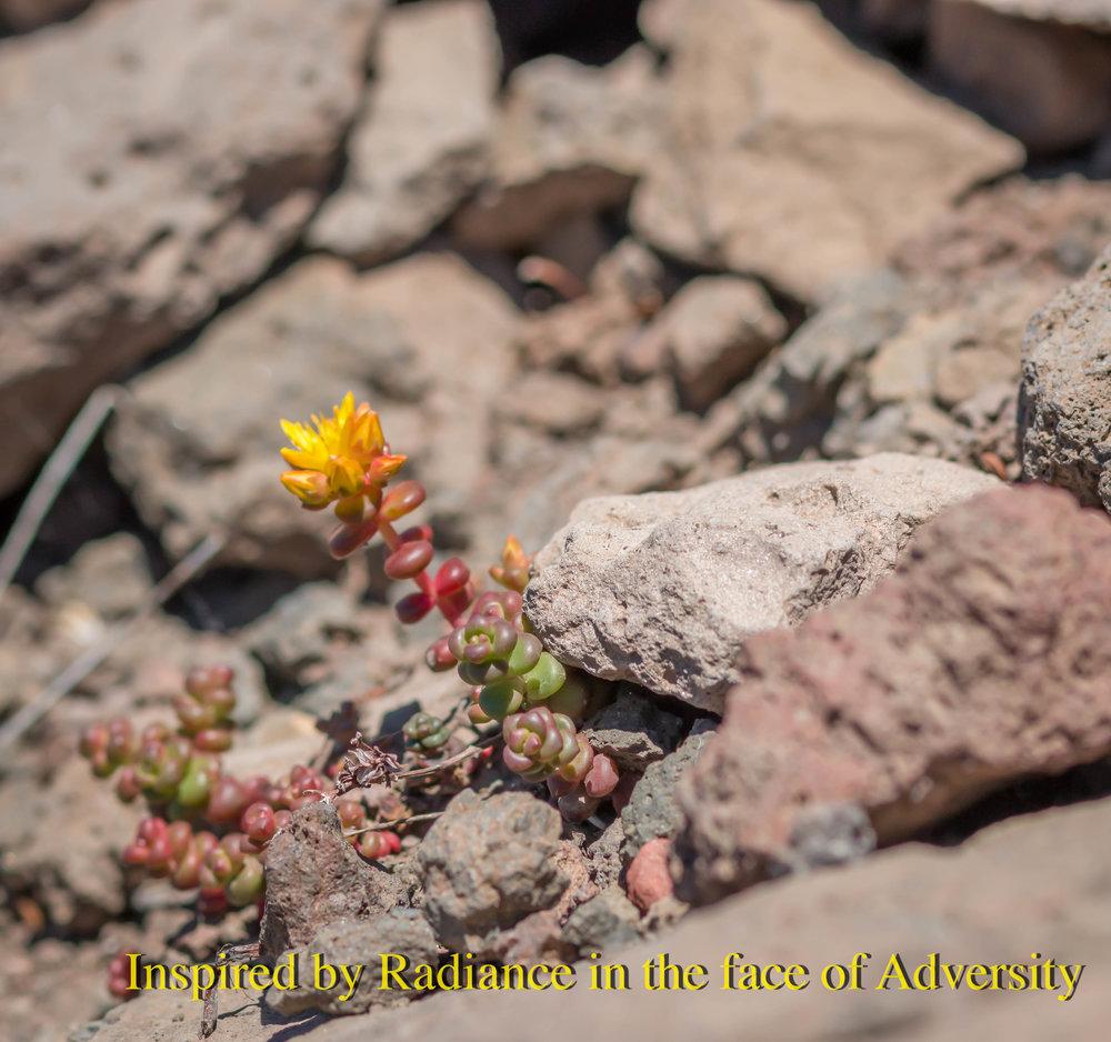 Rocky Flower big.jpg