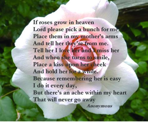 if roses grow.jpg