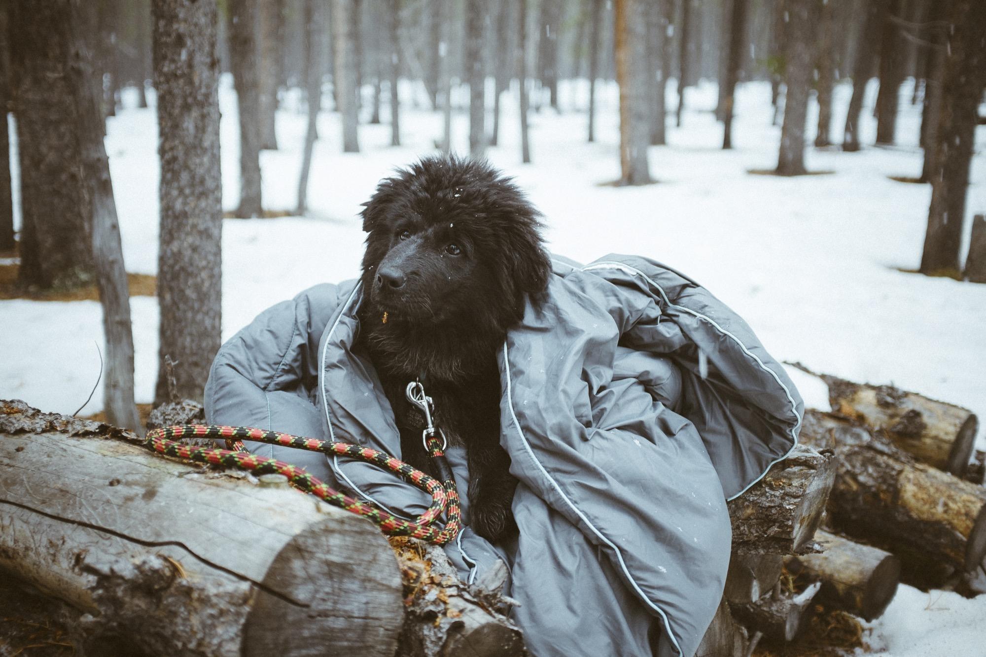 Dog in Rumpl blanket by Adam Concannon_a30