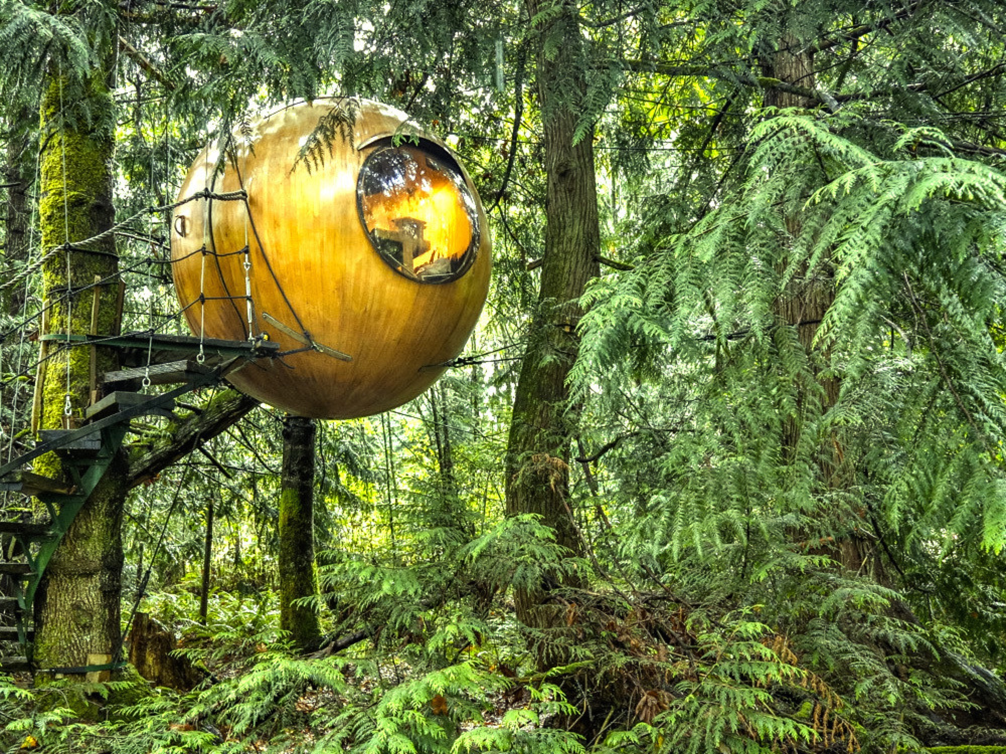 Spherical tree house by Free Spirit Spheres / Photo Courtesy of Free Spirit Spheres