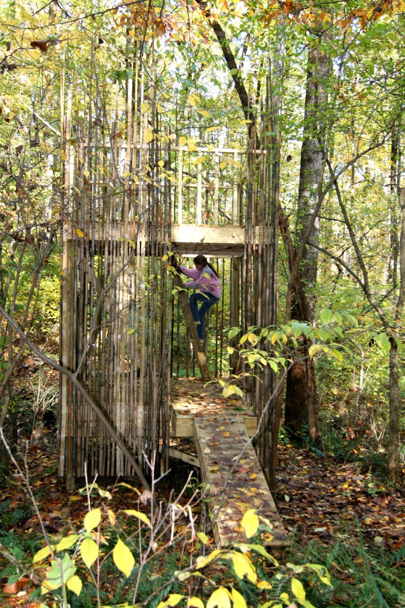 Treehouse designed by architects Laurie Stubb and her husband Peter