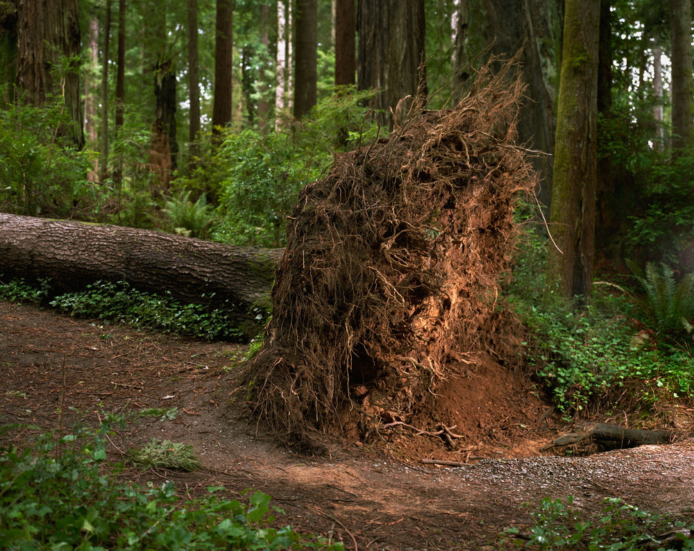 sequoia_810.jpg
