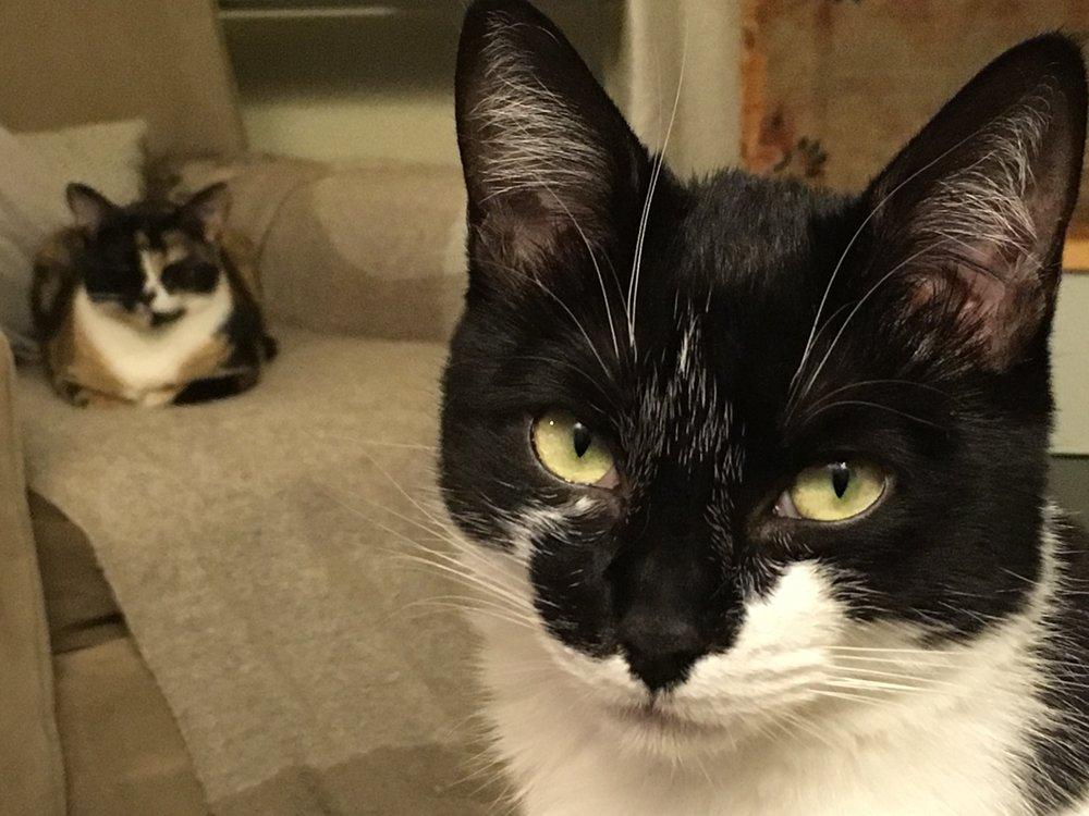 cats.both.jpg