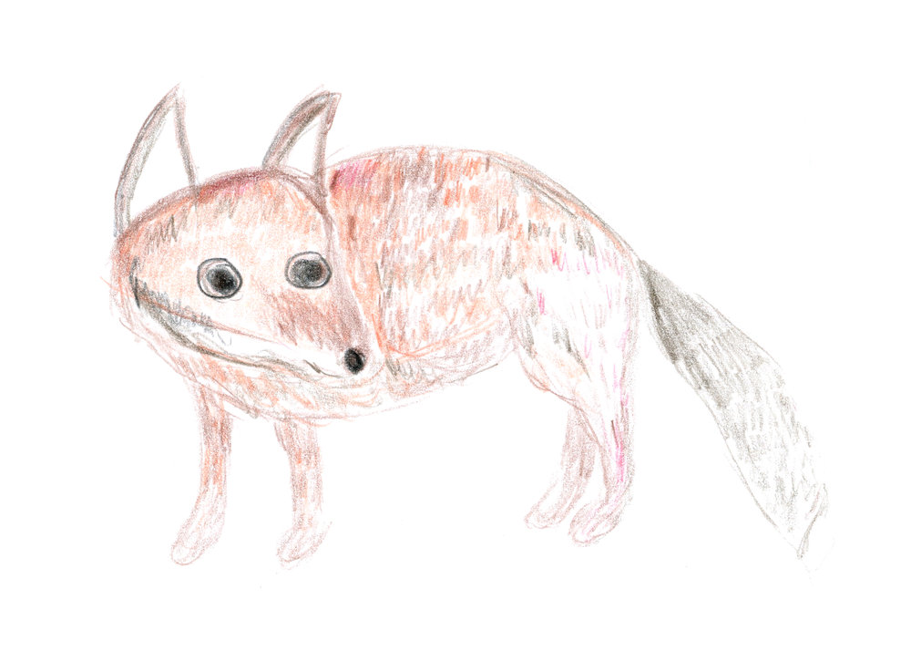 A baby fox drawn by Kristina