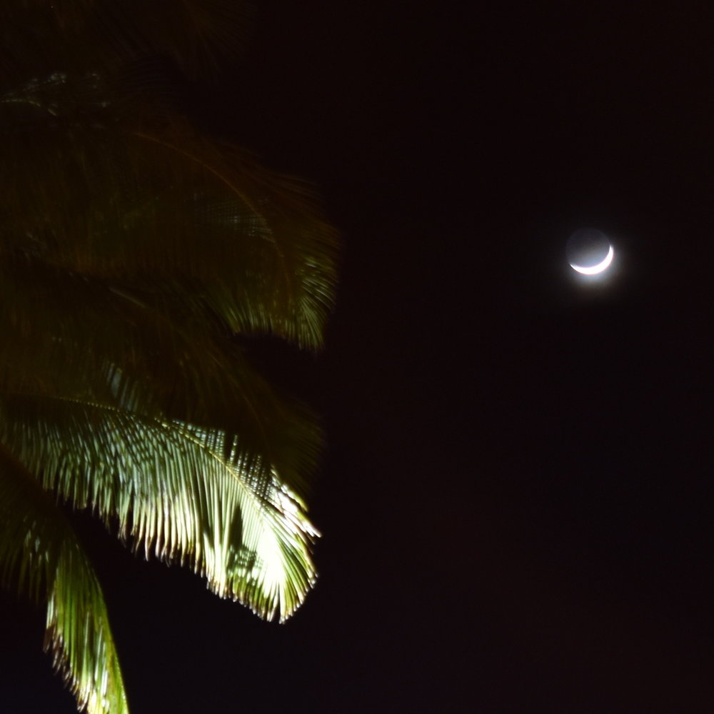 moon.palms.cropped.square.jpg