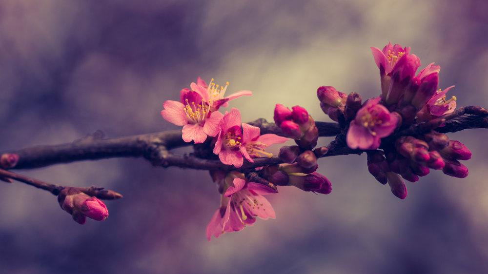 Pink + Florals = 😍