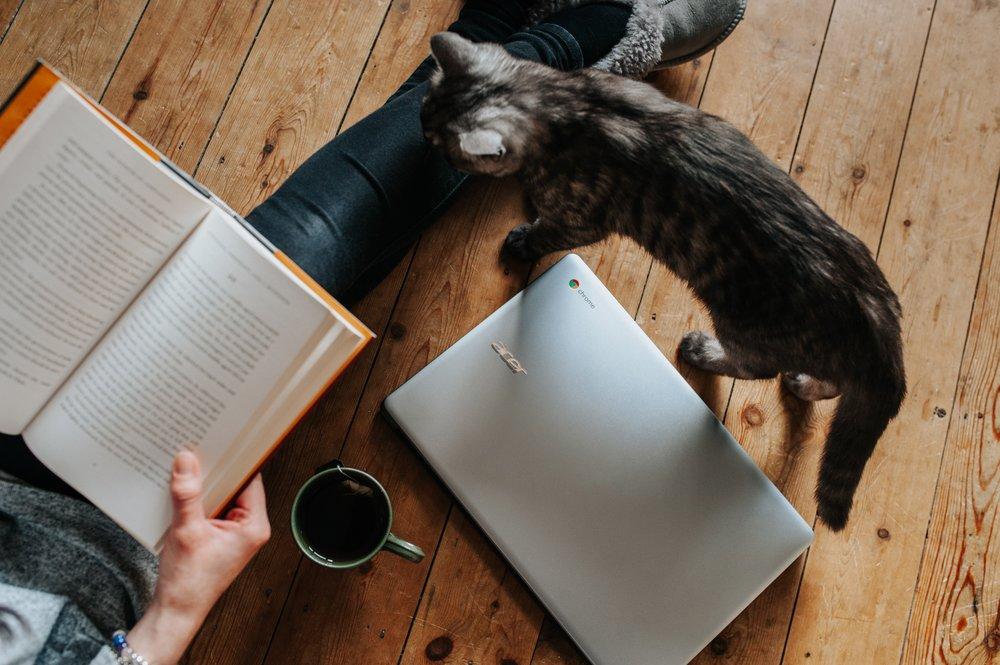 My ❤️ Belongs to Books + Cats