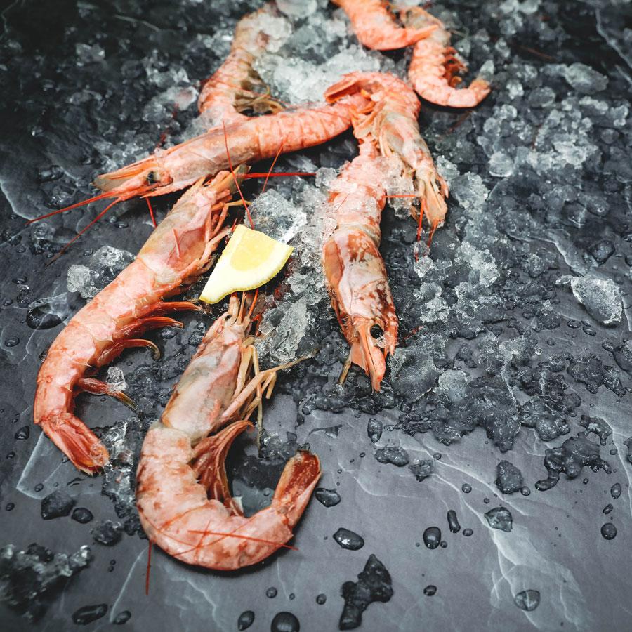 Shrimp_004.jpg
