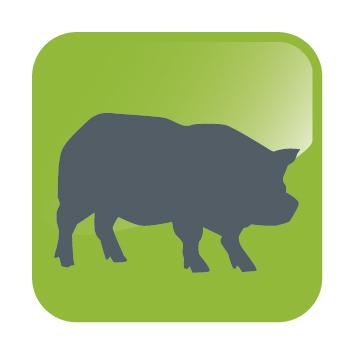 DHA ICONS-Pig.jpg