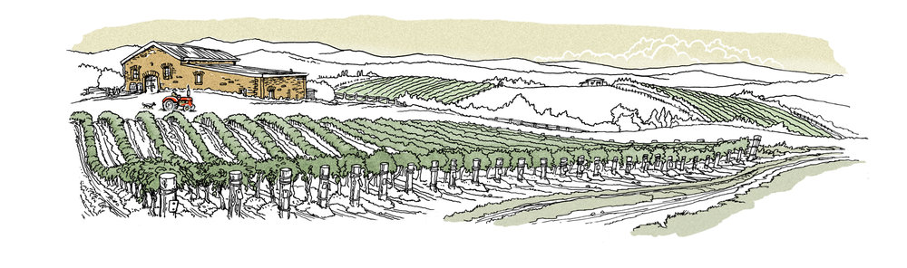 Lew Keilar_ vineyard_ SMALL.jpg