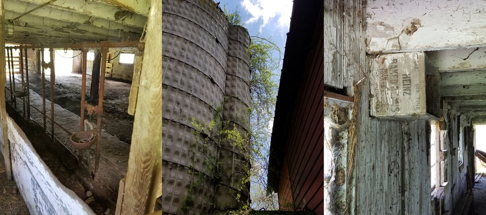 Inside of the dairy barn; looking up at the silo; random Heinz Baked Beans box screwed to the wall
