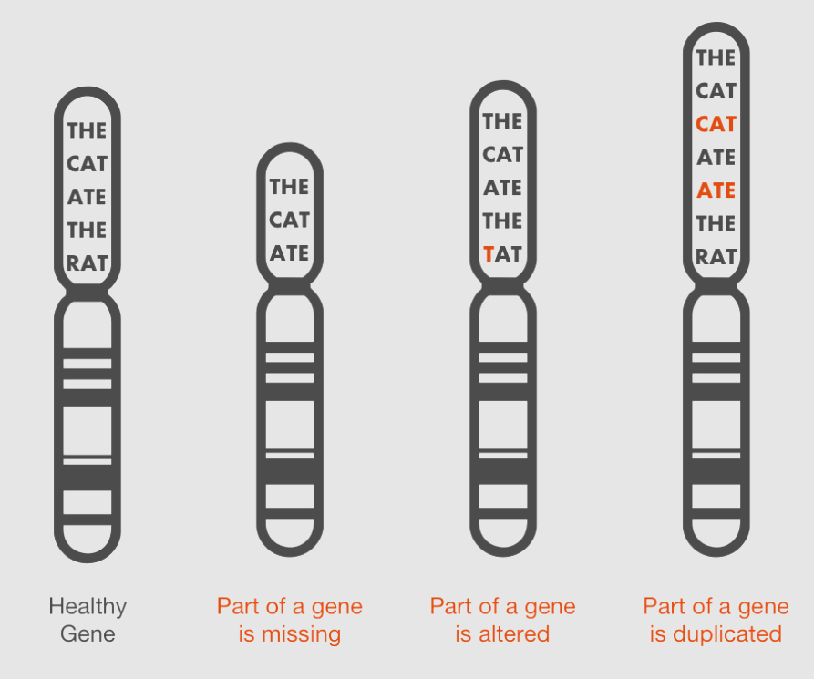 gene2.png