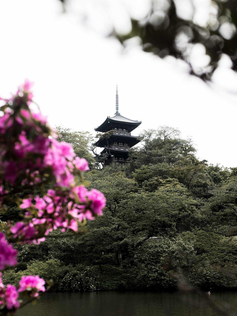 blogpost-japan-6.jpg