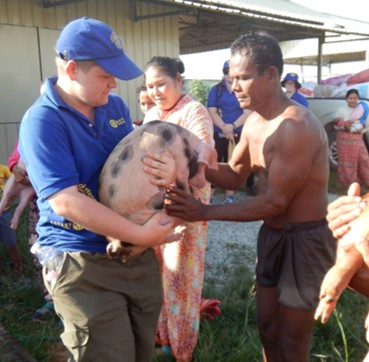 A pig to provide an income for a family