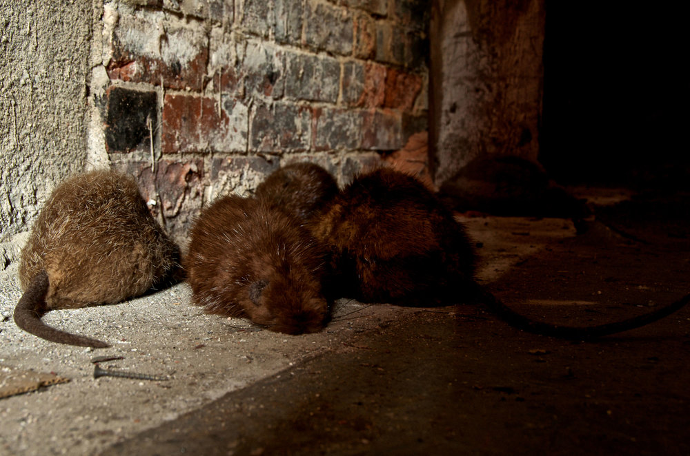 Cellar , 2012, recycled fur, felted wool, wood and found materials  Photo: Tom Cheney