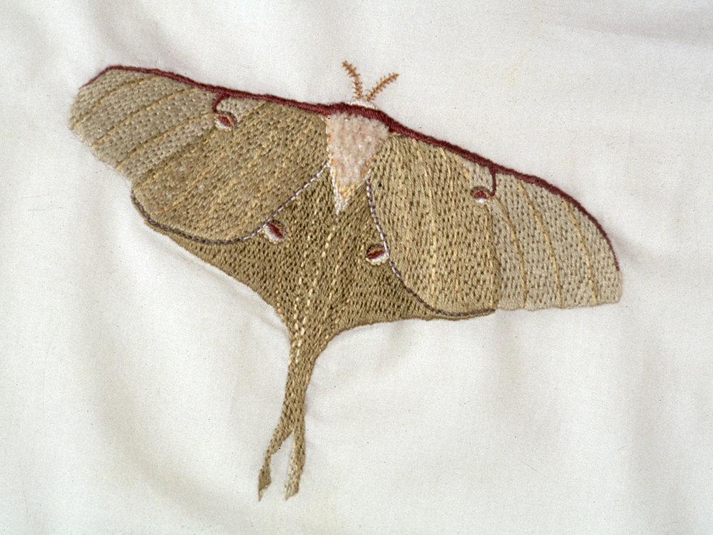 Luna Moth , 2000, embroidery on cotton handkerchief, wooden display case  Photo: Geoffrey Gammon
