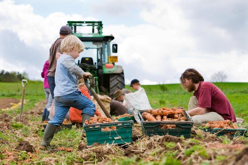 STROUD COMMUNITY AGRICULTURE -