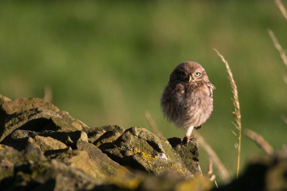 owl heather (6 of 8).jpg