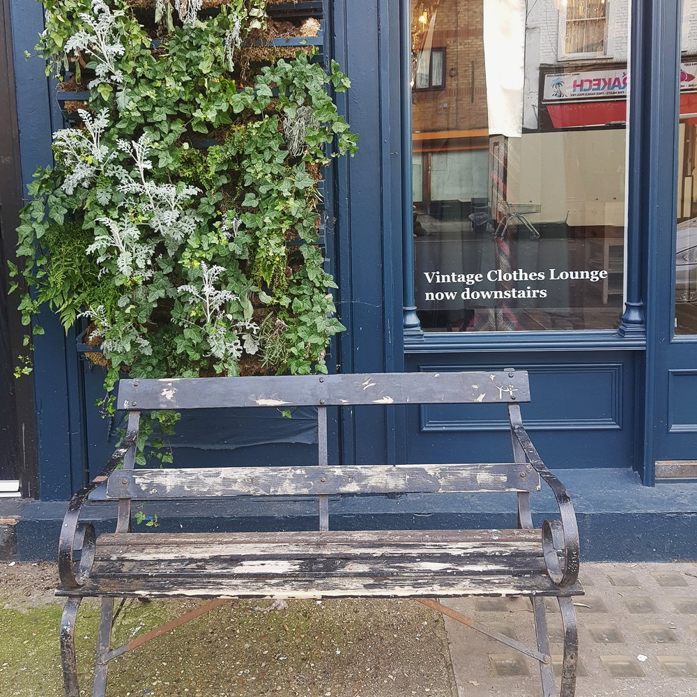 Faded vintage bench on pavement with green plant right above it