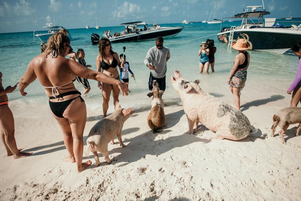 bahamas-vacation-in-exuma-pig-beach-2019DSC_5707.jpg