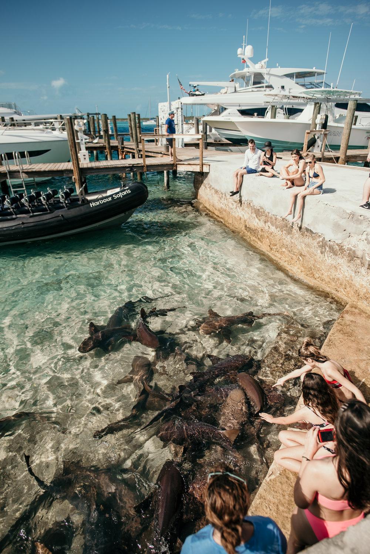staniel cay nurse shark feeding