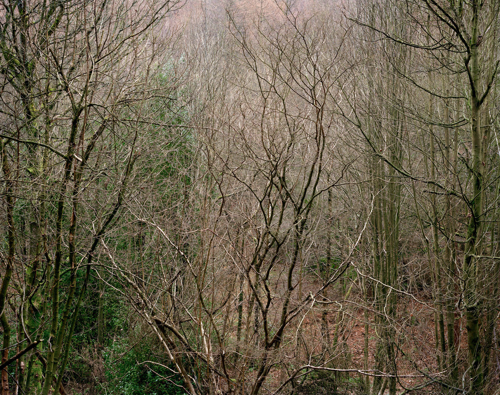 Limb Valley #13, 2011