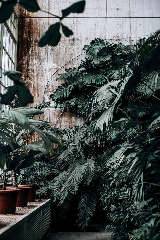 1. Plants -