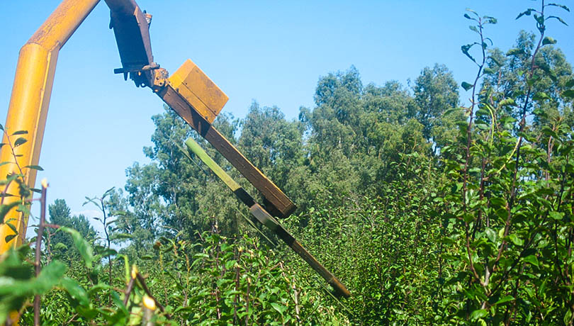 Mechanical Pruning - ENE takes an innovative approach to providing mechanical topping, hedging and skirting services to our customers.