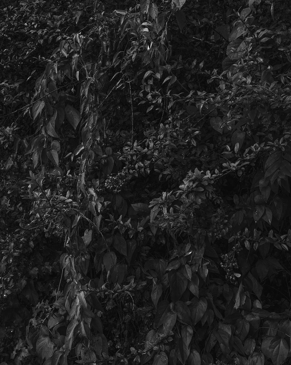 Untitled (Vegetation 5), New Hampshire, 2014