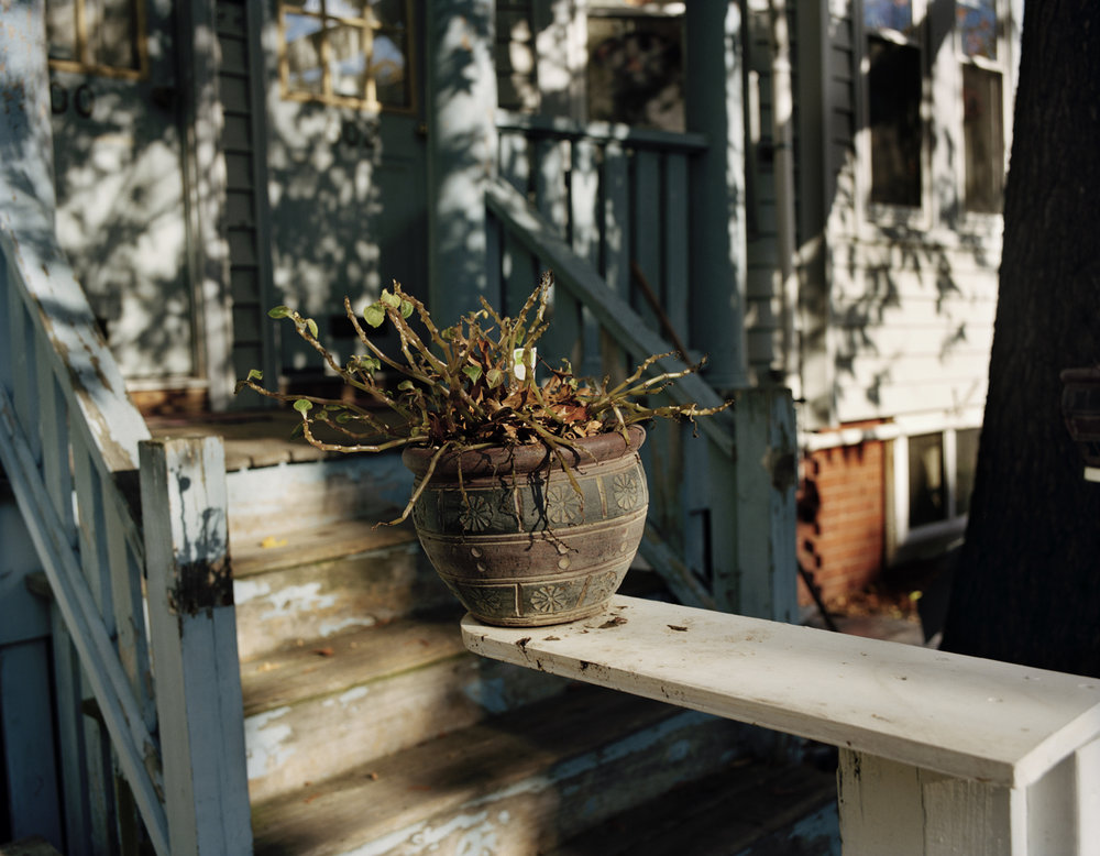 Precarious Plant on Ledge, 2013