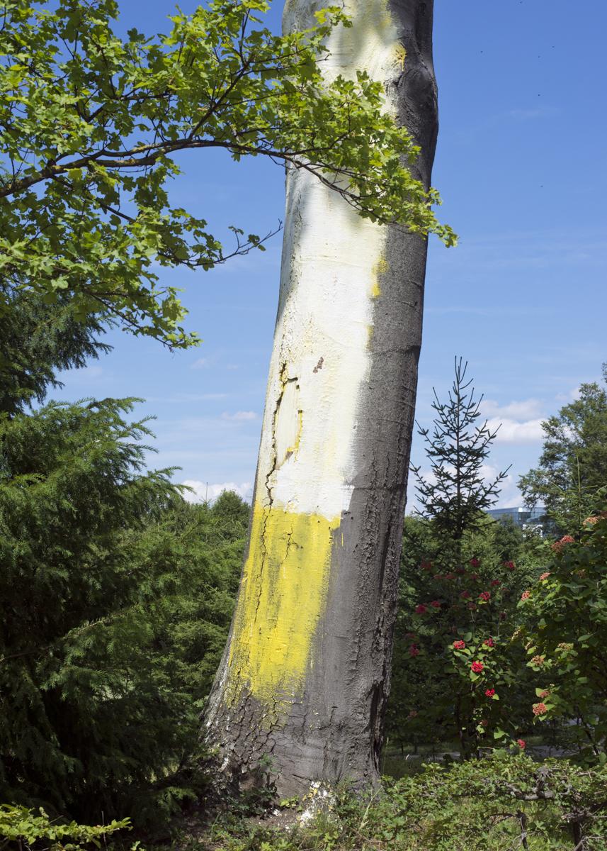 Painted tree, 2014